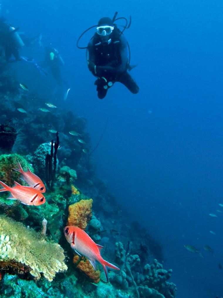 Image: Diving at La Sorciere
