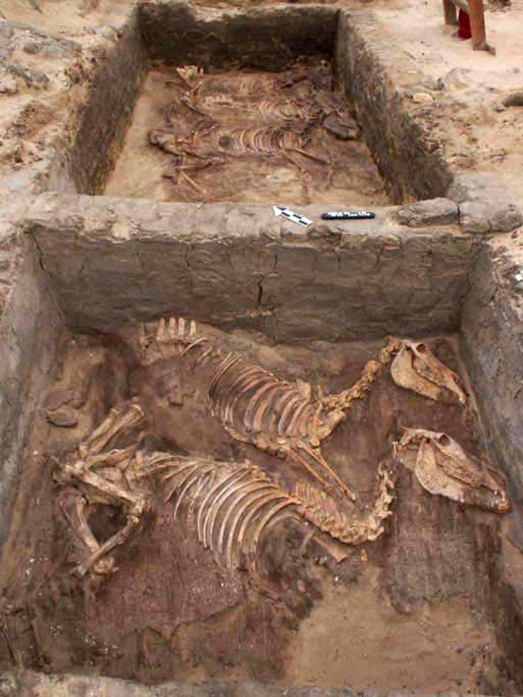 Image: Donkey skeletons