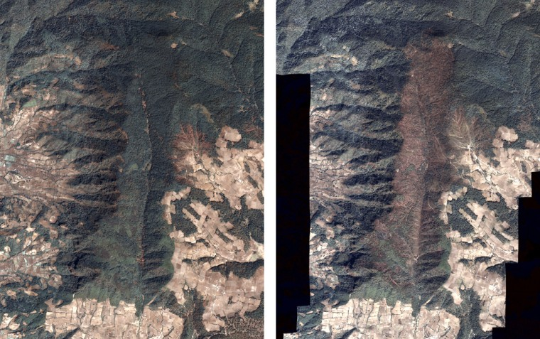 These satellite images made available via NASA show the Lomas de Aparicio area within Mexico's monarch butterfly preserve. The right image, taken on Feb. 232008, shows severe deforestation (brown areas denote lack of trees) compared with the left image, taken in 2004.