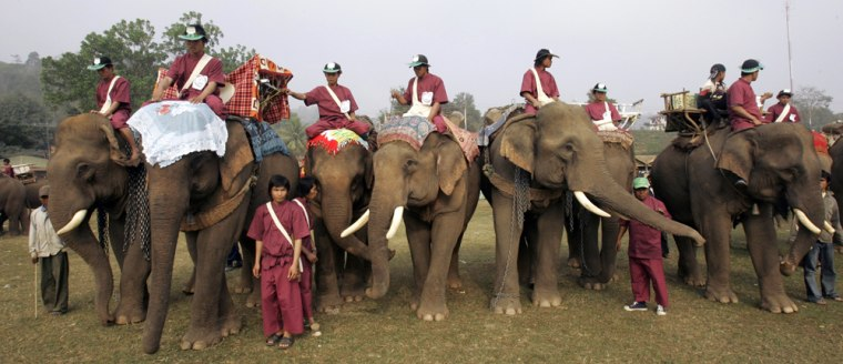 Image: Elephants and mahouts arrive at the second annual Elephant Festival in Paklay, Laos
