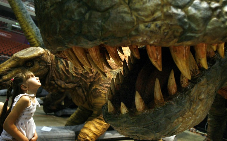 Image: Amy Hingerty, age five, looks into the jaws of an automated Tyrannosaurus Rex