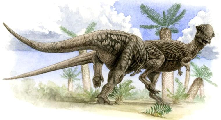 Image: Pachycephalosaurus