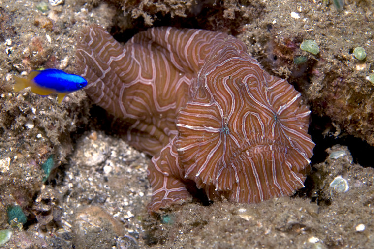 Image: Newfound fish