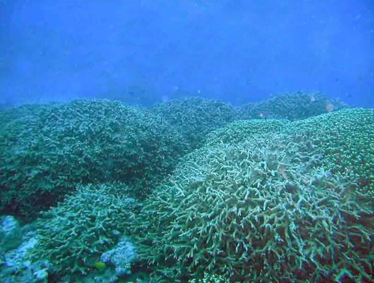 Image: Marine life in Bikini atoll