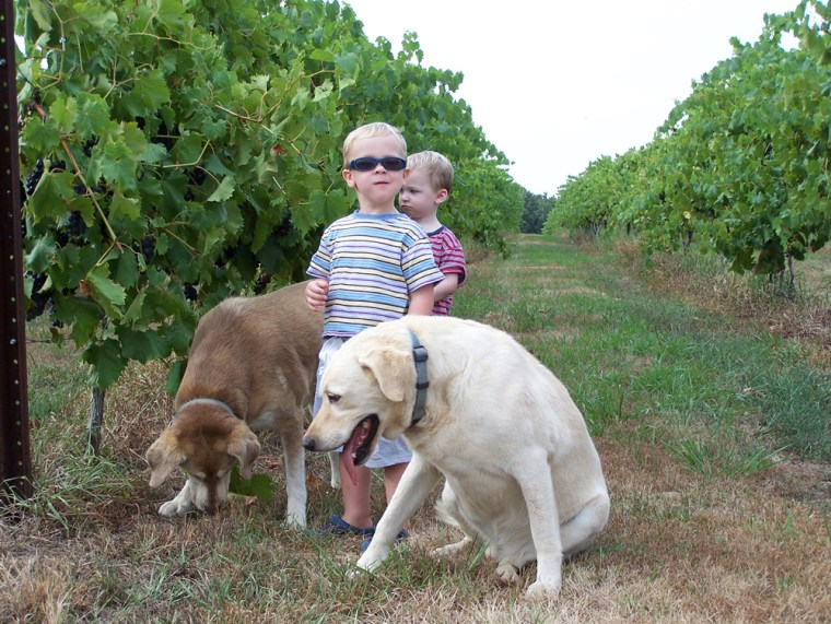 Image: Dogs and kids in vineyard