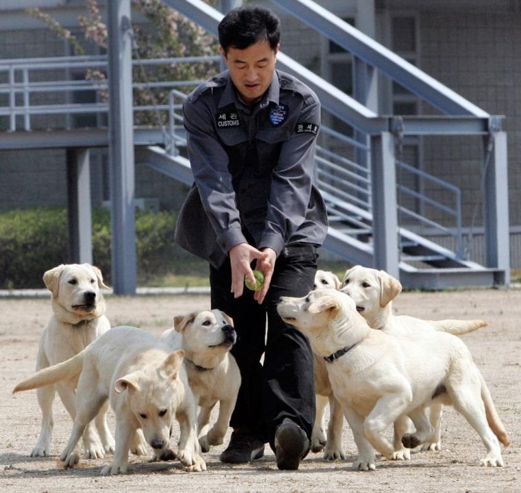 Image: clone dogs