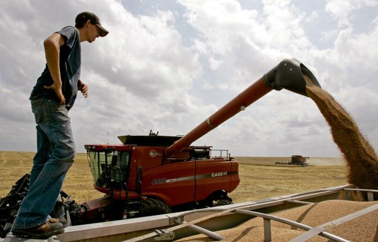 Image: Grain harvest