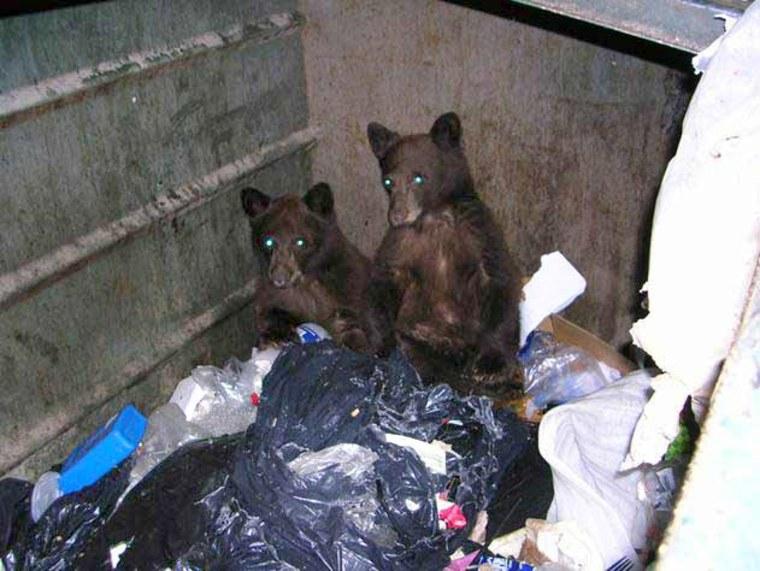 Image: Bears in trash