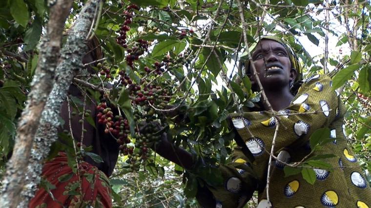 Image: Rwandan coffee grower Jeanette Nyirabaganwa