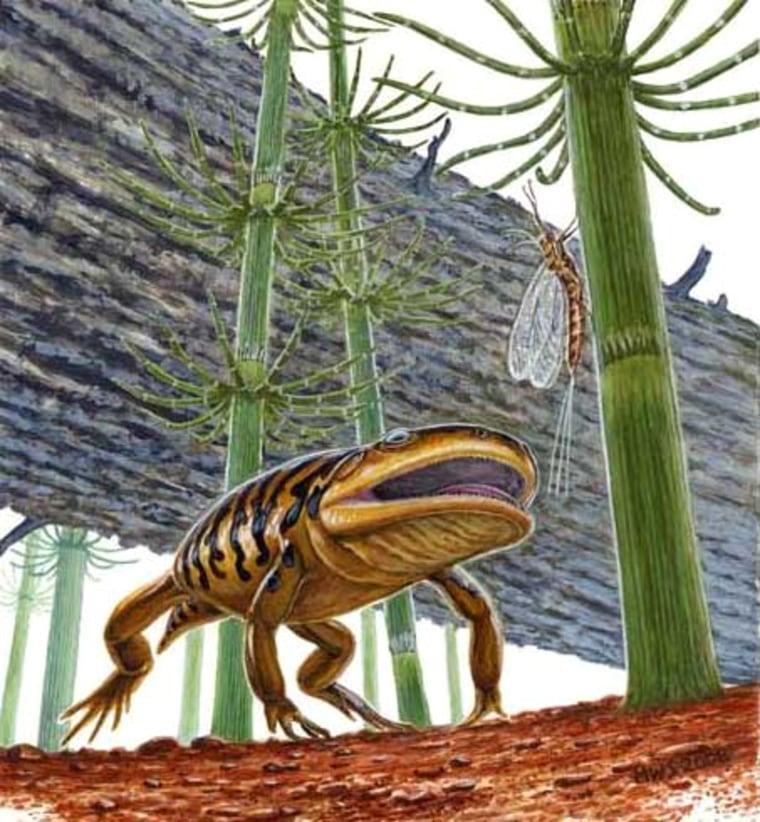 Image: Gerobatrachus hottoni