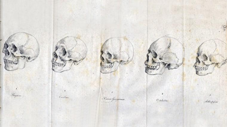 Image: Skulls