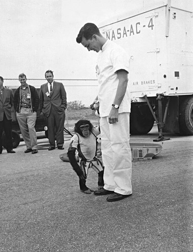 Ham the chimpanzee, shown with his trainer, was the first to ride a full-sized Mercury vehicle in 1961, a dress-rehearsal of sorts for what NASA hoped, at the time, would be the world's first manned space flight.