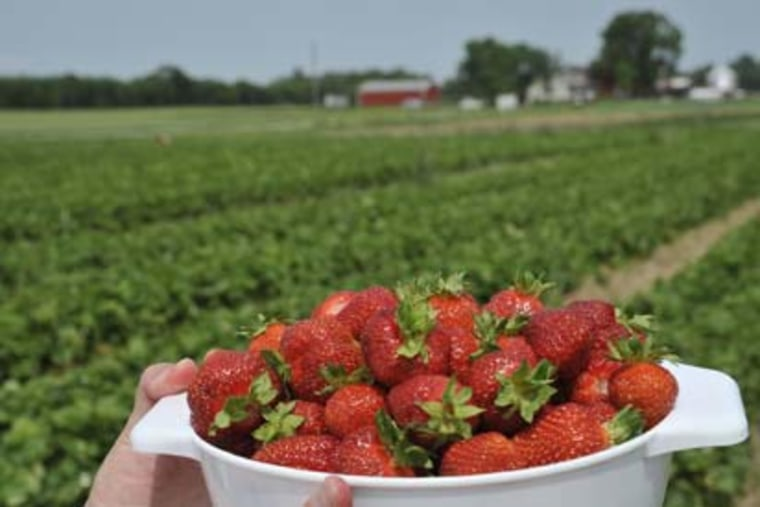 Average shoppers chose locally grown strawberries over those shipped from farther away, and preferred berries that came from small farms over those from large industrial producers.