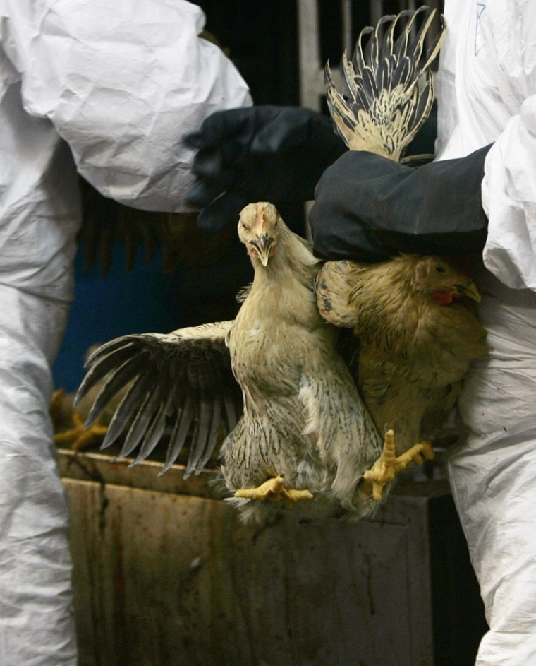 Image: Chicken going to slaughter in Hong Kong