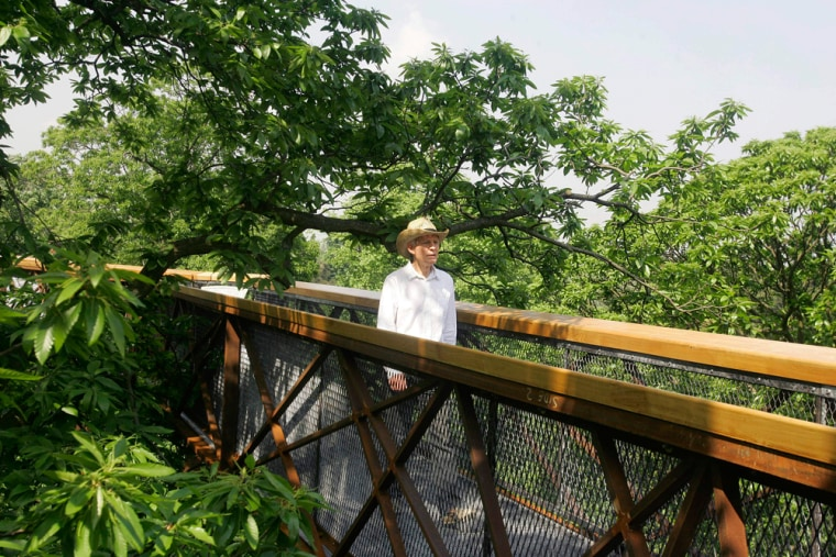 Image: Xstrata Treetop Walkway at The Royal Botanic Gardens