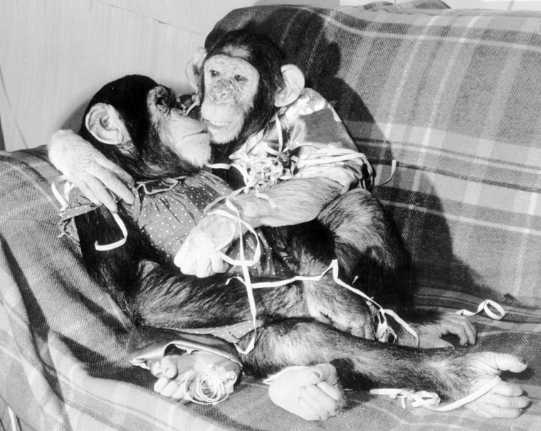 Image: chimps hugging