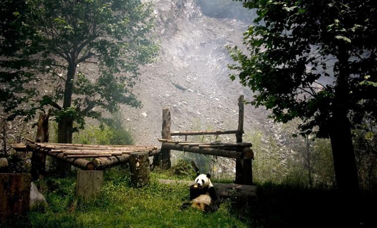 Image: panda