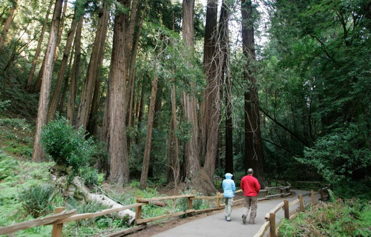 Image: A couple walk along a pathway beneath giant redwoods at the Muir Woods National Monument in Marin County, Calif.