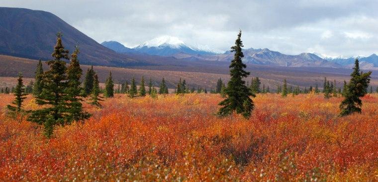 Image: The Stampede Trail, Alaska