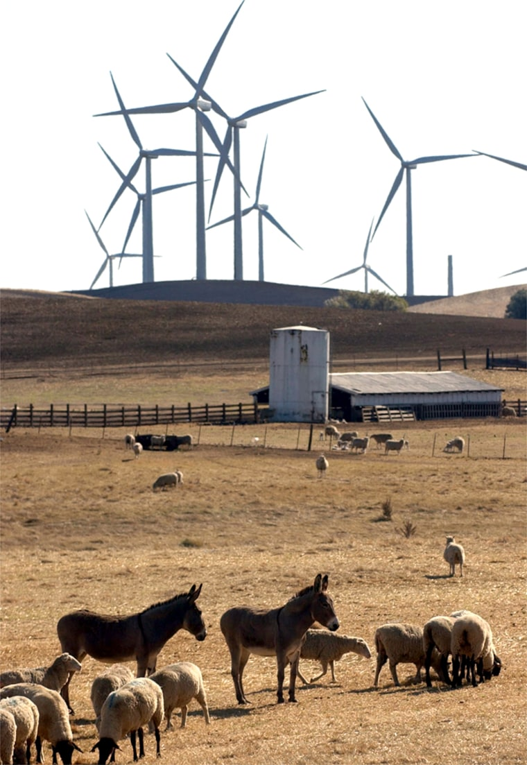 Donkeys and sheep graze on a farm as windmills tower in the background in Birds Landing, Calif.