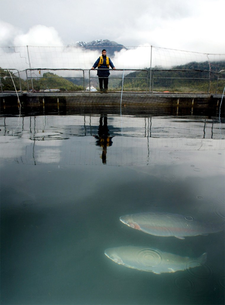 CHILEAN WORKER WATCHES SALMON AT FARM IN SOUTHERN CHILE