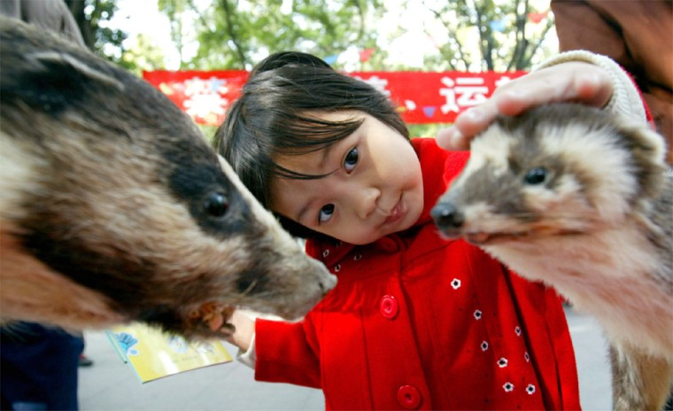 A CHINESE GIRL LOOKS AT STUFFED CIVET CATS ON DISPLAY AT AN ANTI-SARS EXHIBITION IN GUANGZHOU