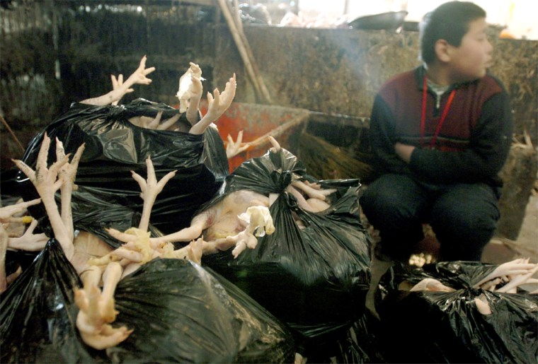 CHINESE BOY SITS NEXT TO SLAUGHTERED CHICKENS AT WHOLESALE POULTRY MARKET