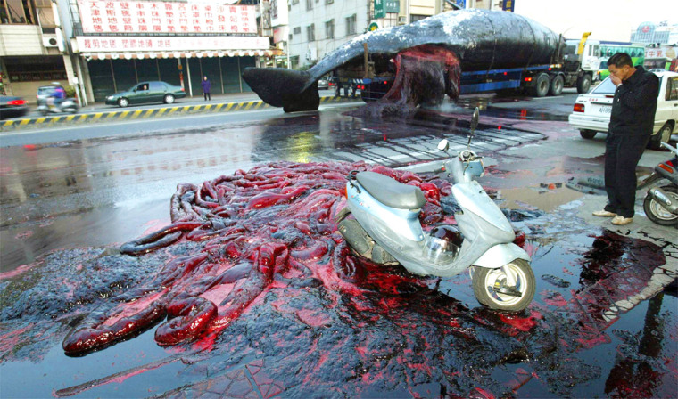 TRUCK CARRIES CORPSE OF A SPERM WHALE IN TAINAN