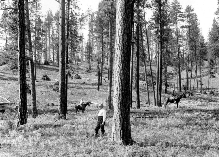 This 1909 photo is used in a U.S. Forest Service brochure with other photos to suggest how forests have gotten thicker over the years without preventive thinning. Logging critics have pointed out that the photo was taken after the area was cut.