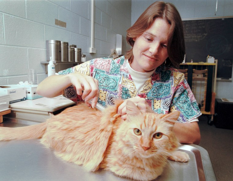 Gail Davison draws blood from a cat namedGarfield at the University of Georgia College of Veterinary Medicine.