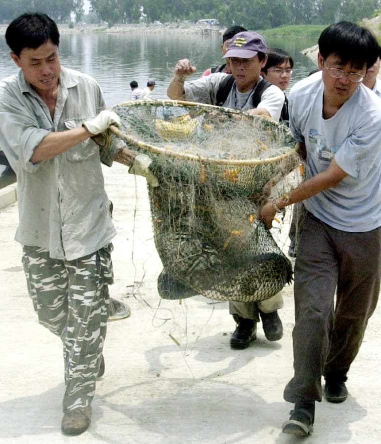 CROCODILE IS BAGGED BY CONSERVATION WORKERS IN HONG KONG