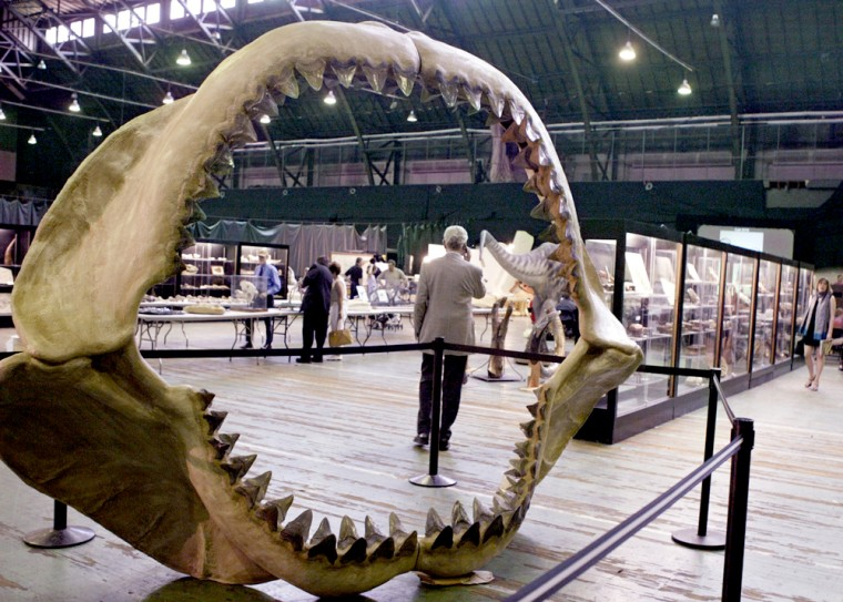 As seen through ancient shark jaws, a man talks on a cell phone during Thursday's prehistoric-creatures auction in New York.