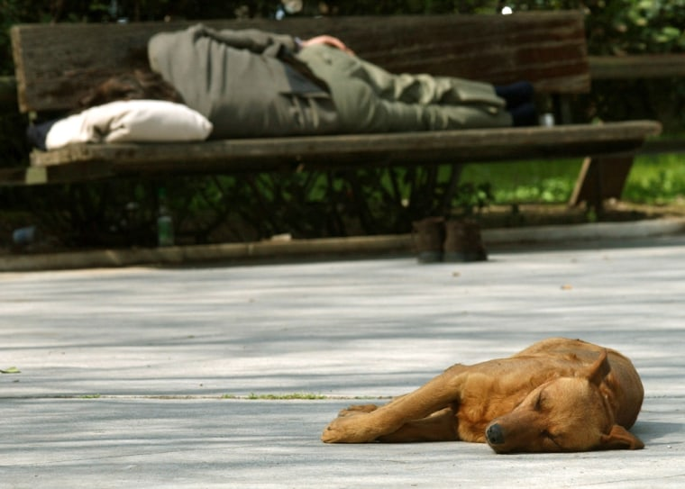 A stray dog sleepsin central Athens. The RSPCA is veryconcerned about a lack of municipal trained staff in Athens to round up dogs humanely.