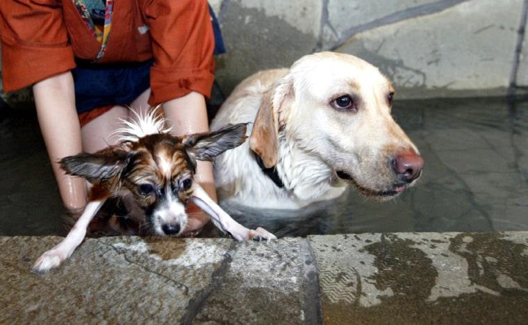 Dog Spa Thrives While Japan Enjoys National Holiday