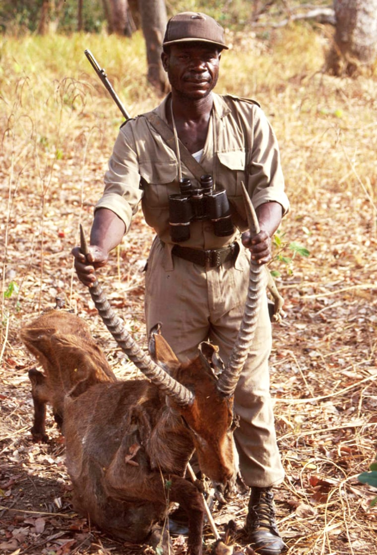 A Ghanaian wildlife ranger holds a waterbuck antelopethat waskilled by bushmeat hunters weeks before.