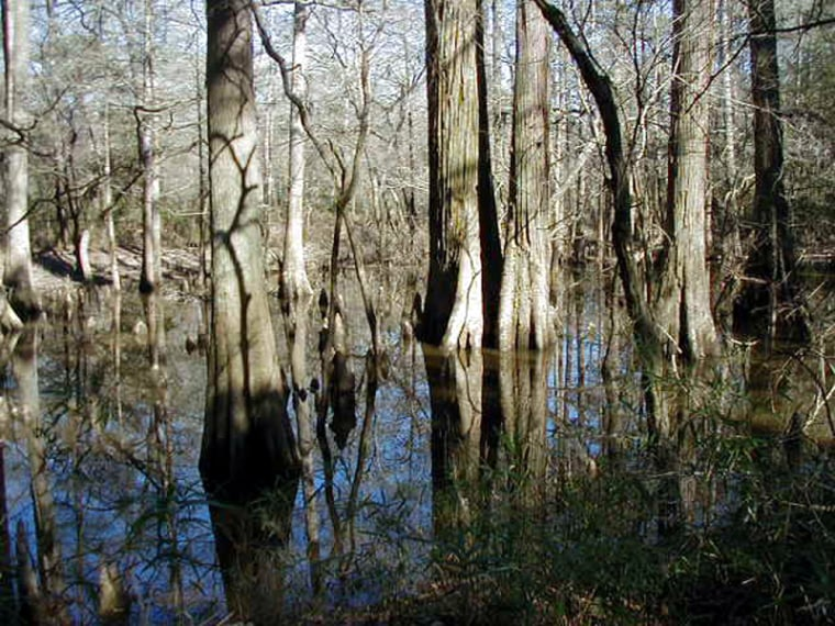 Big Thicket National Preserve in Texas is one of 14 national areas that have privately owned minerals beneath them.