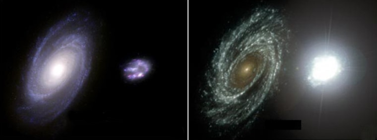 This illustrationcompares a mature galaxy and a newborn galaxy. At left is the view in visible light; at right is the view in ultraviolet wavelengths, where hot, newborn starsare particularly luminous.NASA's Galaxy Evolution Explorer spotted the ultraviolet flashes from several dozen galaxies relatively near our own.
