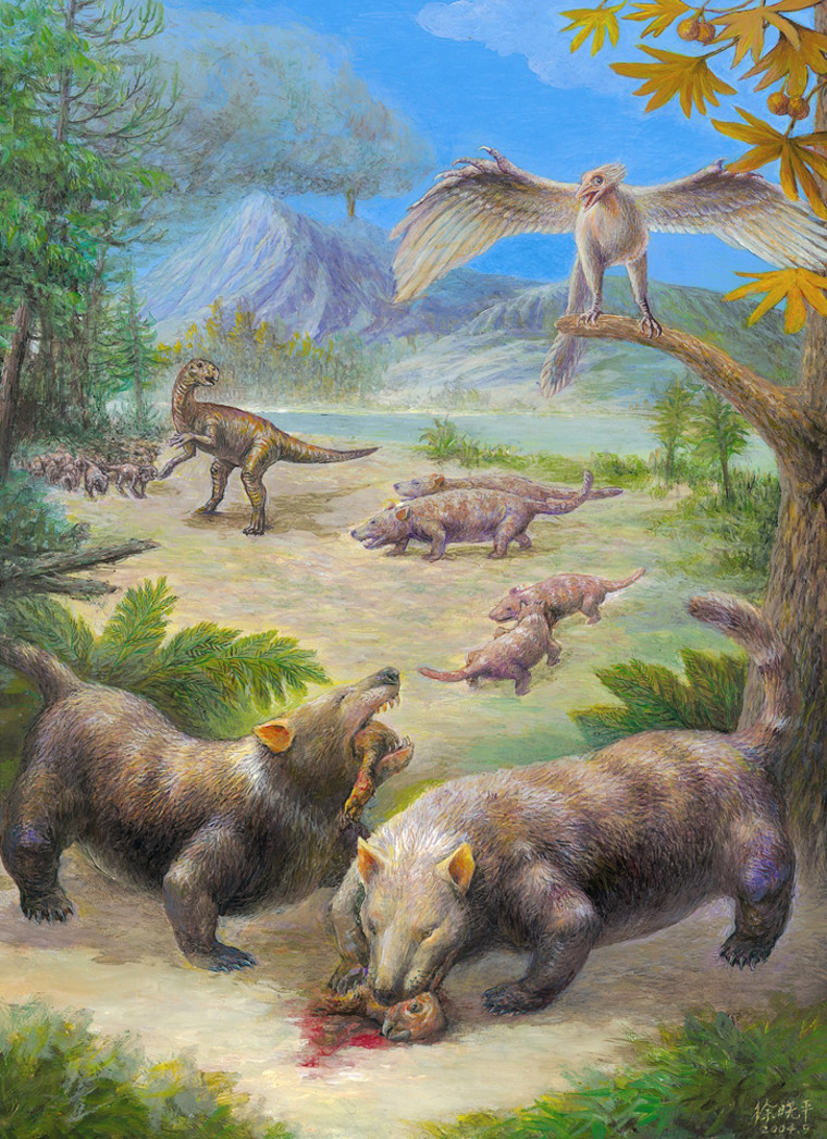 Early mammals chase and eat smaller dinosaurs in this illustration prompted by the recent fossil discoveries. This artist's conception shows doglike animals in the foreground and opossum-sized creatures in the background.
