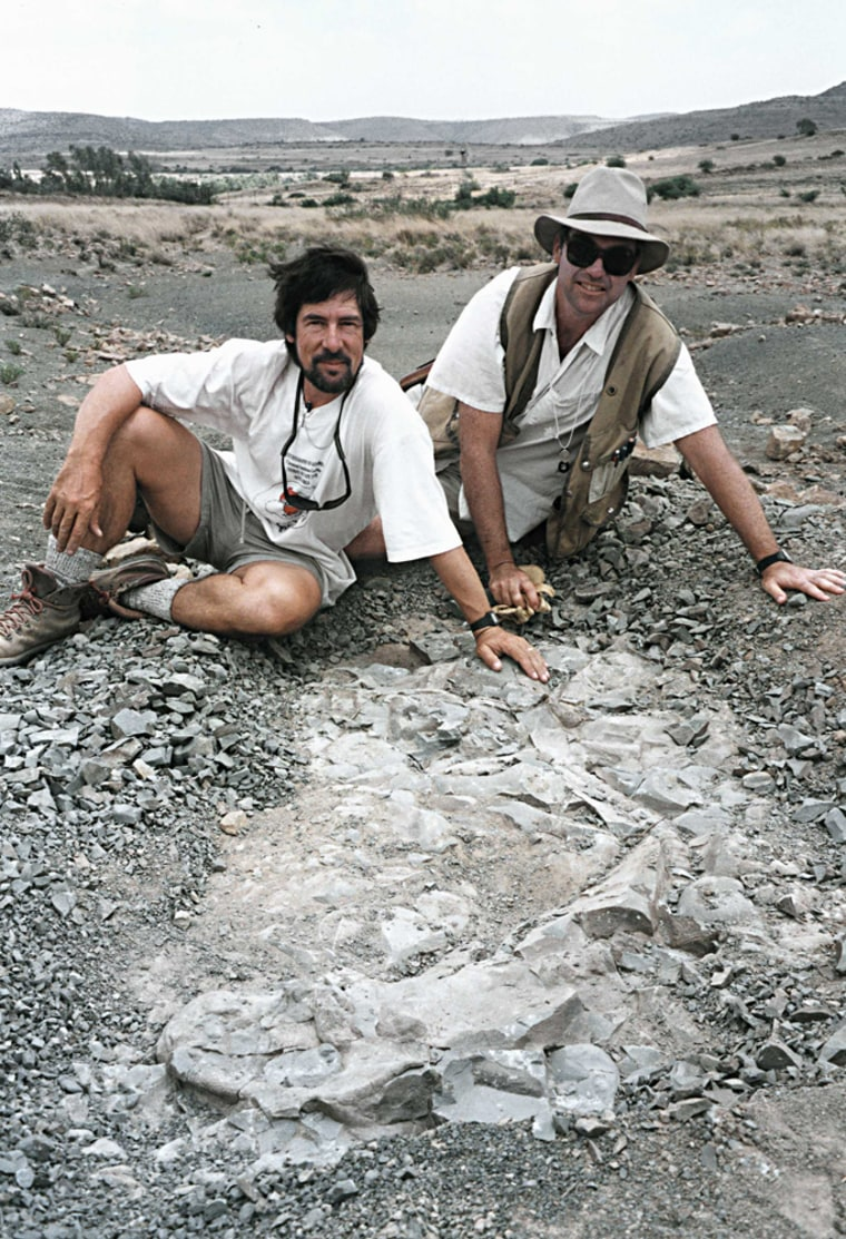 Roger Smith of the South African Museum and Peter Ward ofthe University of Washington show off the fossil of a gorgonopsid, a predator thatdisappeared about 250 million years ago in the Permian-Triassic mass extinction. The fossil was discovered in the Karoo region of South Africa.