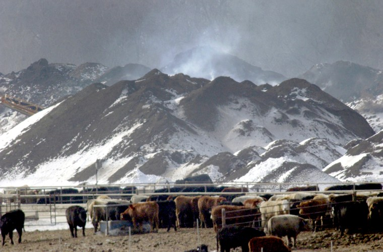 A huge mountain of cow manure is seen smoldering at a feedlot near Milford, Neb., last week.