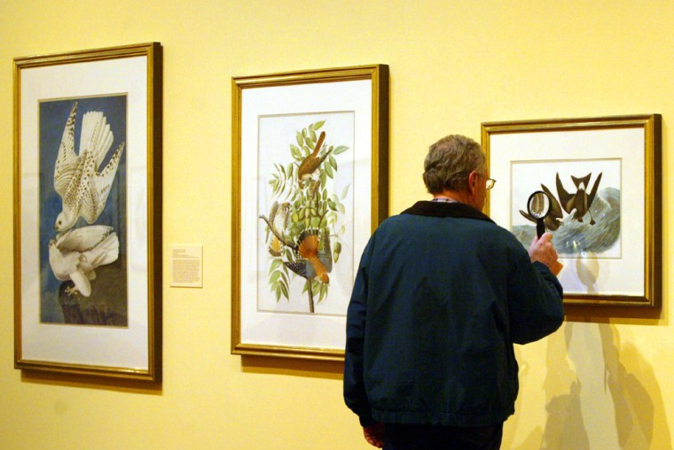 Arnold Blaufarb, of Long Beach, N.Y., inspects one ofthe Audubonwatercolors at the New York Historical Society on Wednesday.