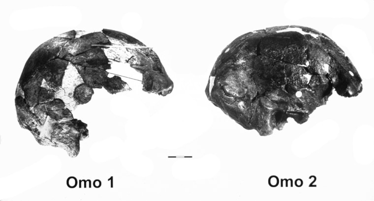 These two partial skulls were unearthed in 1967 near the Omo River in southwestern Ethiopia.