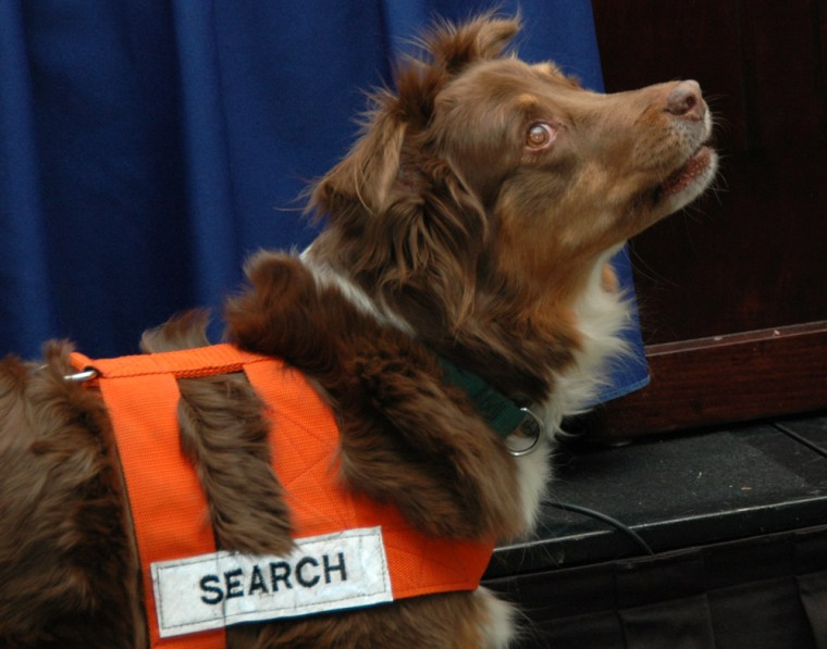 An Australian shepherd named Glory looks up and barks after catching the scent of extracted teeth hidden in a jar, during a demonstration at a Washington news briefing on Sunday.
