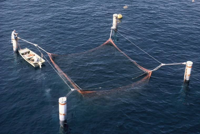 This view from an oil platform 35 miles off Texas shows a prototype submerged net pen for raising fish.
