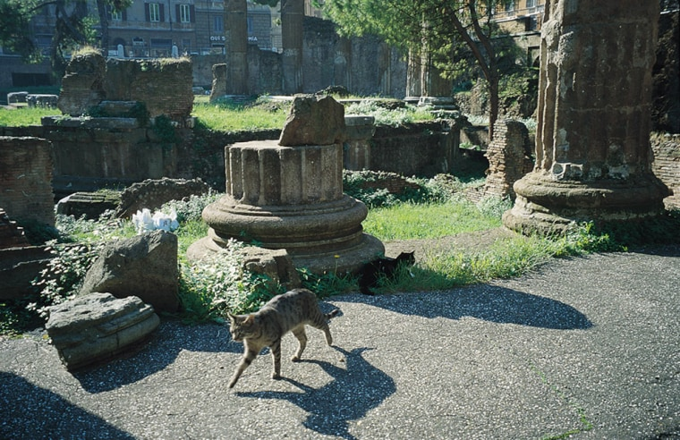 Animal lovers throughout Italy arelooking to Pope Benedict XVI for changes that will relieve the plight of the country's straycats, like these thatlive among the ruins in Rome.