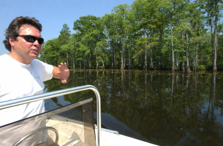 Biologist and anti-logging activist Michael Greene points to bald cypress trees that could be logged in the future as he navigates through the swamps at Manchac, La.