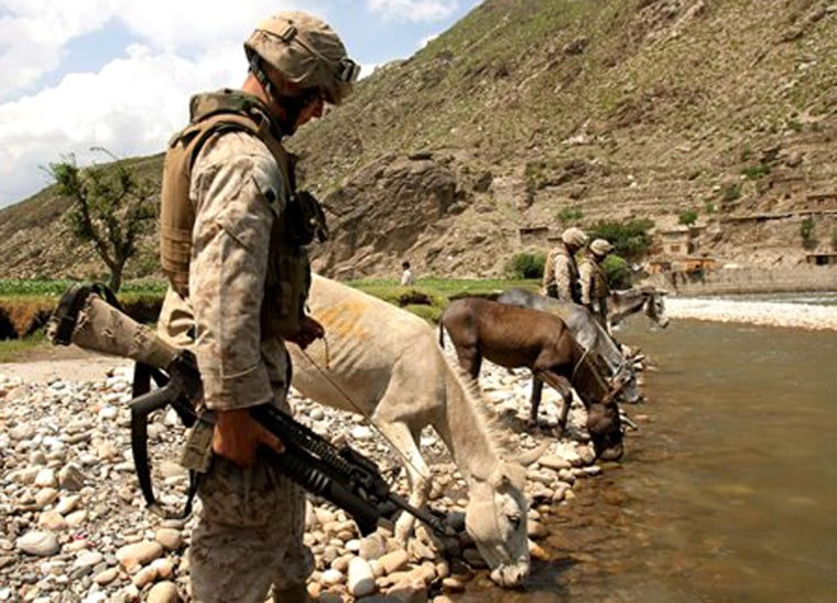U.S. Marines stop to allow donkeys they use to transport supplies to drink water from a river in Kandagal village, in Afghanistan's eastern Kunar province.