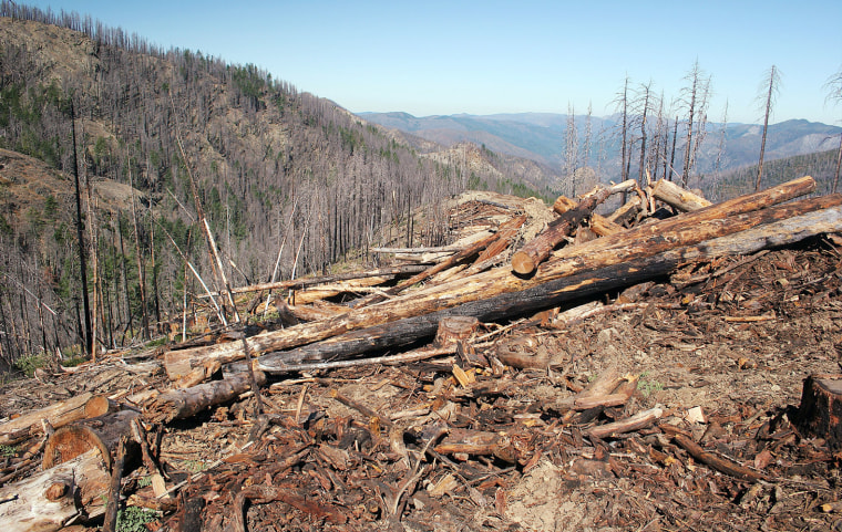 A federal agency mistakenly allowed this section of a protected area in southwestern Oregon to be logged.