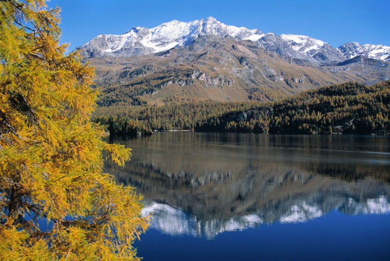 The Piz Corvatsch mountain is reflected in the Silsersee Lake near Sils with a golden larch standing at the bank in September, 2001.