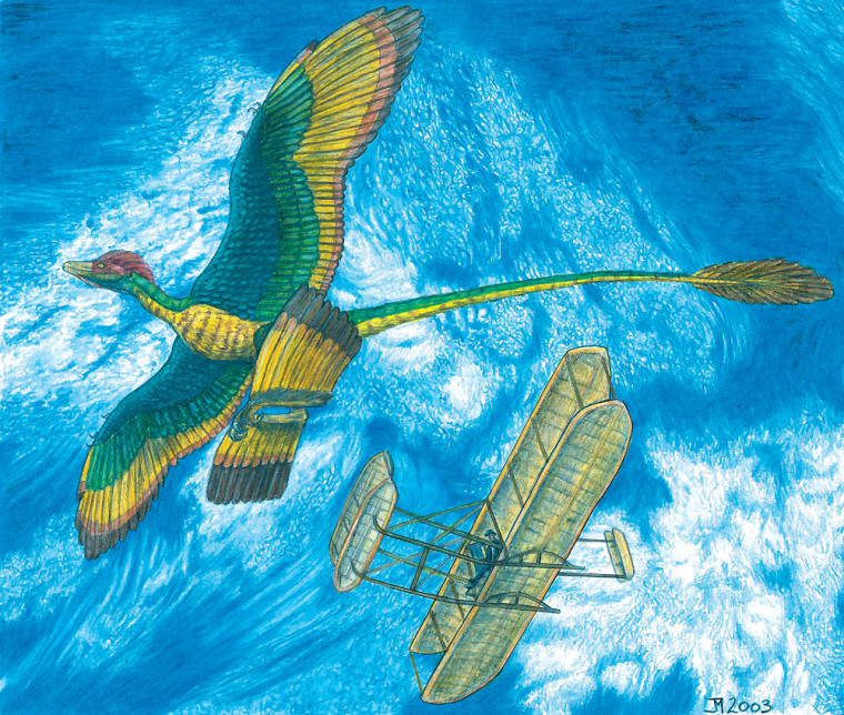 This illustration presents a parallel between Microraptor gui's two sets of wings and the Wright brothers' biplane.